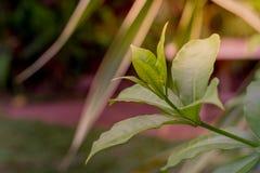 Άποψη φύσης κινηματογραφήσεων σε πρώτο πλάνο του πράσινου φύλλου στη θολωμένη πρασινάδα στοκ εικόνες