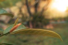 Άποψη φύσης κινηματογραφήσεων σε πρώτο πλάνο του πράσινου φύλλου στη θολωμένη πρασινάδα στοκ εικόνες με δικαίωμα ελεύθερης χρήσης