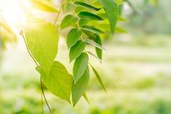 Άποψη φύσης κινηματογραφήσεων σε πρώτο πλάνο του πράσινου φύλλου στη θολωμένη πρασινάδα στοκ εικόνα