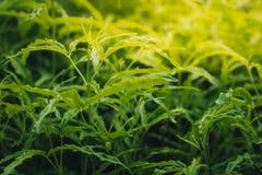 Άποψη φύσης κινηματογραφήσεων σε πρώτο πλάνο του πράσινου φύλλου στη θολωμένη πρασινάδα στοκ φωτογραφίες με δικαίωμα ελεύθερης χρήσης