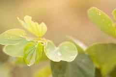 Άποψη φύσης κινηματογραφήσεων σε πρώτο πλάνο του πράσινου φύλλου στοκ εικόνες