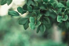 Άποψη φύσης κινηματογραφήσεων σε πρώτο πλάνο του πράσινου φύλλου Στοκ Εικόνα