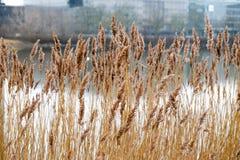 Άποψη φύσης στην Κοπεγχάγη Δανία Στοκ φωτογραφίες με δικαίωμα ελεύθερης χρήσης