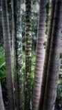 Άποψη φύσης στο δάσος Στοκ φωτογραφία με δικαίωμα ελεύθερης χρήσης