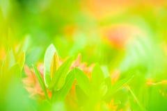 Άποψη φύσης των όμορφων πράσινων νέων φύλλων στη ζωηρόχρωμη πλάτη Στοκ Εικόνες
