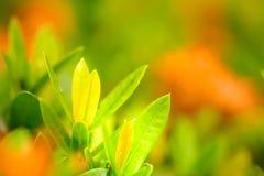Άποψη φύσης των όμορφων πράσινων νέων φύλλων στη ζωηρόχρωμη πλάτη Στοκ φωτογραφία με δικαίωμα ελεύθερης χρήσης