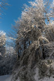 Άποψη χειμερινού χιονιού Στοκ φωτογραφία με δικαίωμα ελεύθερης χρήσης