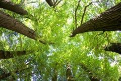 Άποψη ψάρι-ματιών των δέντρων σε ένα δάσος το καλοκαίρι Στοκ φωτογραφία με δικαίωμα ελεύθερης χρήσης