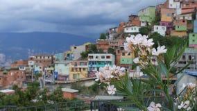 """Άποψη """"Comuna 13 """"γειτονιά με τα άσπρα λουλούδια στο πρώτο πλάνο - Medellin Κολομβία απόθεμα βίντεο"""