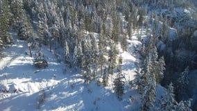Άποψη Aireal σχετικά με το χειμερινό δάσος απόθεμα βίντεο