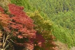 Άποψη Arashiyama στο Κιότο κατά τη διάρκεια του φθινοπώρου Στοκ Φωτογραφία