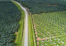 Άποψη Arial της φυτείας ελαιοφοινίκων στην ανατολική Ασία Στοκ Φωτογραφία