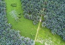 Άποψη Arial της φυτείας ελαιοφοινίκων στην ανατολική Ασία Στοκ φωτογραφίες με δικαίωμα ελεύθερης χρήσης