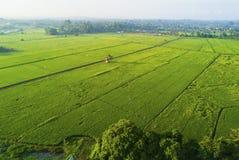 Άποψη Arial του πράσινου τομέα ορυζώνα στην ανατολική Ασία κατά τη διάρκεια της ανατολής Στοκ Εικόνες