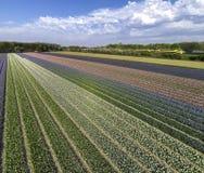 Άποψη Birdseye του τομέα και του τραίνου λουλουδιών στοκ εικόνα
