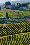 Άποψη classico Chianti στοκ εικόνα με δικαίωμα ελεύθερης χρήσης