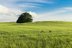 Άποψη Greenfield στοκ φωτογραφίες