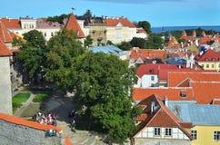 Άποψη Panoramoc του Ταλίν Στοκ Εικόνες