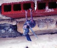 Άποψη Teide Στοκ φωτογραφίες με δικαίωμα ελεύθερης χρήσης