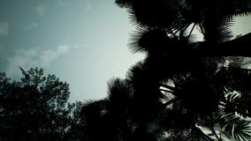 Άποψη Timelapse πέρα από μια όμορφη πολύβλαστη πράσινη ζούγκλα τρισδιάστατη απόδοση Στοκ εικόνες με δικαίωμα ελεύθερης χρήσης