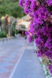 Άποψη Unfocused Archena της οδού σε Balneario de Archena με έναν κλάδο του bougainvillea Στοκ φωτογραφία με δικαίωμα ελεύθερης χρήσης