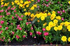 Άρδευση των κρεβατιών λουλουδιών στοκ εικόνες