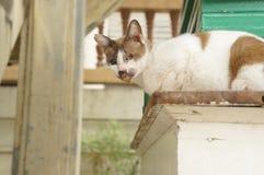 Άρρωστη έννοια θηλαστικών πόσιμου νερού γατών ζωική Στοκ Εικόνα