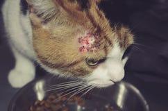 Άρρωστη γάτα με τα μπαλώματα στοκ φωτογραφία