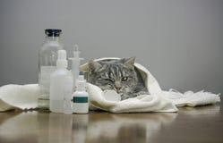 Άρρωστη γάτα σε έναν πίνακα με τα φάρμακα Στοκ Φωτογραφίες