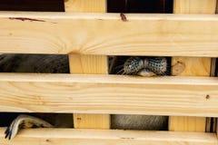 Άρρωστη σφραγίδα στο ξύλινο διαμέτρημα Έτοιμος να απελευθερώσει στη φύση στοκ φωτογραφίες