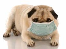 άρρωστοι σκυλιών Στοκ Εικόνες