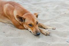 Άρρωστο σκυλί που ξαπλώνει στο έδαφος Στοκ εικόνα με δικαίωμα ελεύθερης χρήσης