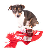 Άρρωστο σκυλί με την ιατρική σε ένα άσπρο υπόβαθρο Στοκ φωτογραφία με δικαίωμα ελεύθερης χρήσης