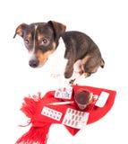 Άρρωστο σκυλί με την ιατρική σε ένα άσπρο υπόβαθρο Στοκ Εικόνες