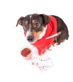 Άρρωστο σκυλί με την ιατρική σε ένα άσπρο υπόβαθρο Στοκ Φωτογραφία