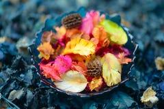 Άρωμα Aromatherapy του πορτοκαλιού Υγεία και ομορφιά, ακόμα έννοια ζωής στοκ εικόνες με δικαίωμα ελεύθερης χρήσης