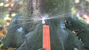 Άρδευση σε ένα πορτοκαλί άλσος απόθεμα βίντεο
