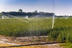 Άρδευση των καλλιεργημένων τομέων Στοκ εικόνα με δικαίωμα ελεύθερης χρήσης