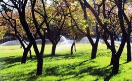 Άρδευση των οπωρωφόρων δέντρων Στοκ Φωτογραφία