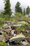 δάση κολπίσκου Στοκ Φωτογραφίες