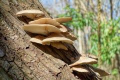 δάση μανιταριών Στοκ Εικόνα