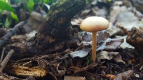 δάση μανιταριών Στοκ Εικόνες