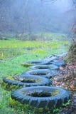 δάση με το μολυσμένο νερό ροδών Στοκ φωτογραφία με δικαίωμα ελεύθερης χρήσης