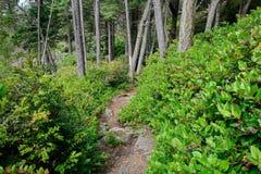 δάση πεζοπορίας στοκ εικόνες