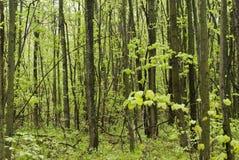 δάση περιπάτων στοκ φωτογραφίες