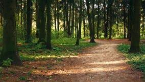 δάση περιπάτων απόθεμα βίντεο