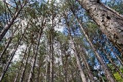 δάση περιπάτων Στοκ εικόνα με δικαίωμα ελεύθερης χρήσης