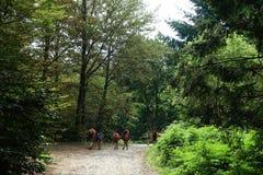 δάση περιπάτων Στοκ Εικόνες