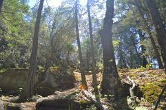 δάση Στοκ εικόνα με δικαίωμα ελεύθερης χρήσης
