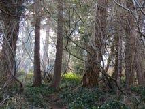 δάση Στοκ Φωτογραφία